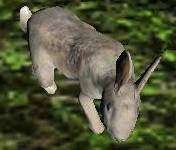 A13_Rabbit.jpg