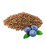 A18plantedBlueberry1.png