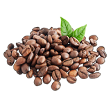 A18plantedCoffee1.png