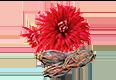 plantedChrysanthemum1.png