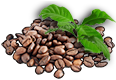 plantedCoffee1.png
