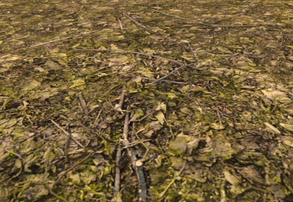 Looks_Forest Ground.png