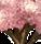 舞い散る桜の木
