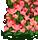赤い花畑(ハート)
