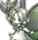 妖精の力がこもった彫像。たまに妖精種の魔石が入手可能。