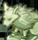 魔狼の力がこもった彫像。たまに魔狼種の魔石が入手可能。