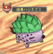 緑果ハリネズミ.jpg
