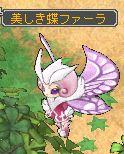 美しき蝶ファーラ.jpg