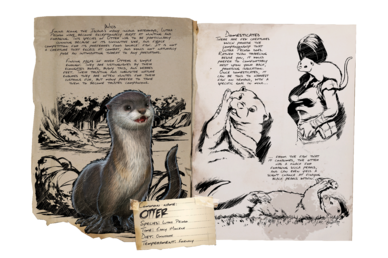 388px-Dossier_Otter.png