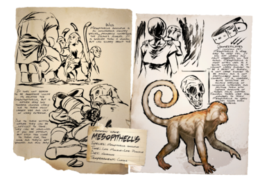 388px-Dossier_Mesopithecus.png
