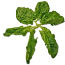 128px-Fresh_Spinach_(Primitive_Plus).png