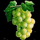 128px-Grapes_(Primitive_Plus).png