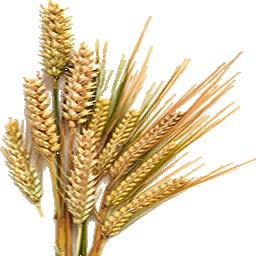 Dried_Barley_(Primitive_Plus).png