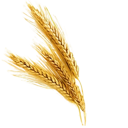 Dried_Wheat_(Primitive_Plus).png