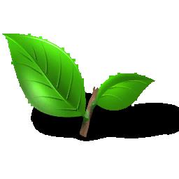 Fresh_Tea_Leaves_(Primitive_Plus).png
