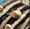 Ossification.PNG