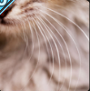 Whiskers.PNG