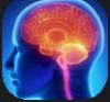 人間の脳.png
