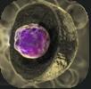 細胞質.png