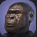 Australopithecus.PNG