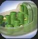 Chloroplasts.PNG