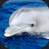 Dolphin_0.png