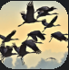 Flocking.PNG