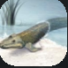 Lungfish.PNG