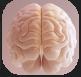 Neocortex.PNG