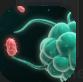 Phagocytic.PNG