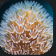 Polyp.PNG