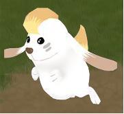 カナン犬.jpg