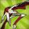 レナクリ2011赤:武器.png