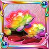 コダイバナの技花(虹)