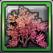 サクラの木.png