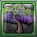 フジの木.png
