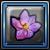 レッズロタスの花.png