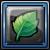 風鈴草の若葉.png