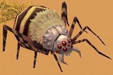 砂漠の毒ゴケグモリ.jpg