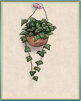 小さな観葉植物.png