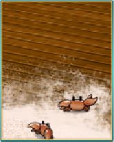 浜茶屋の床.png