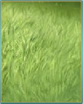 青草の床.png