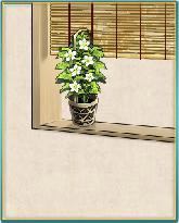 鬼灯の花の窓.png