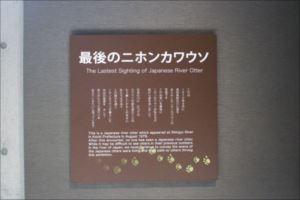 IMG_19895_R_R.JPG