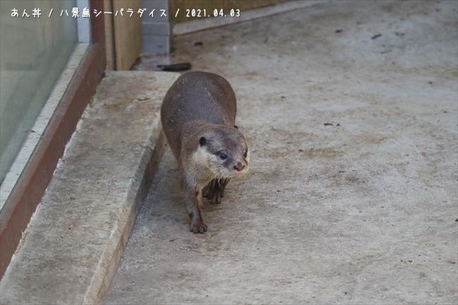 s-20210403_enoshima_0018.jpg