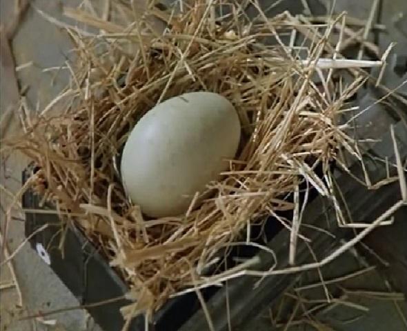 TV版第3シーズンの卵