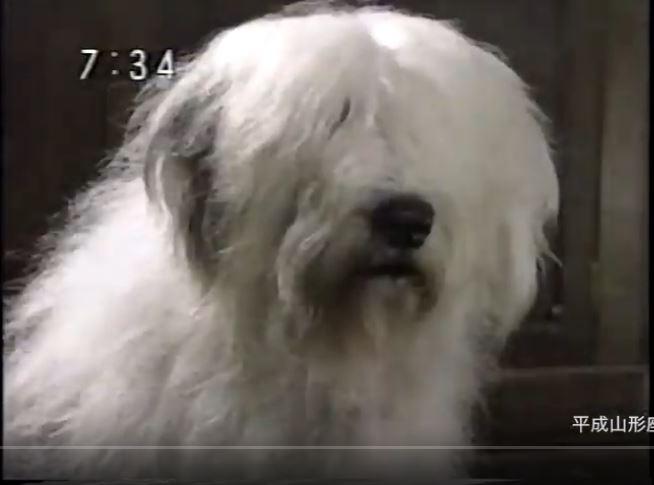 きかんしゃトーマスとイギリスのたびのいずみお姉さんの飼い犬