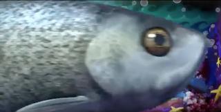 TV版長編第11作の魚