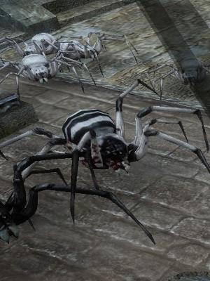 白縞兵隊蜘蛛.jpg