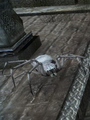 白蜘蛛.jpg